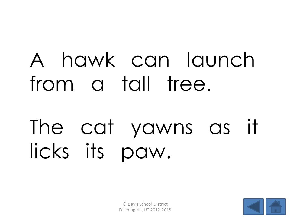 A hawk can launch from a tall tree.