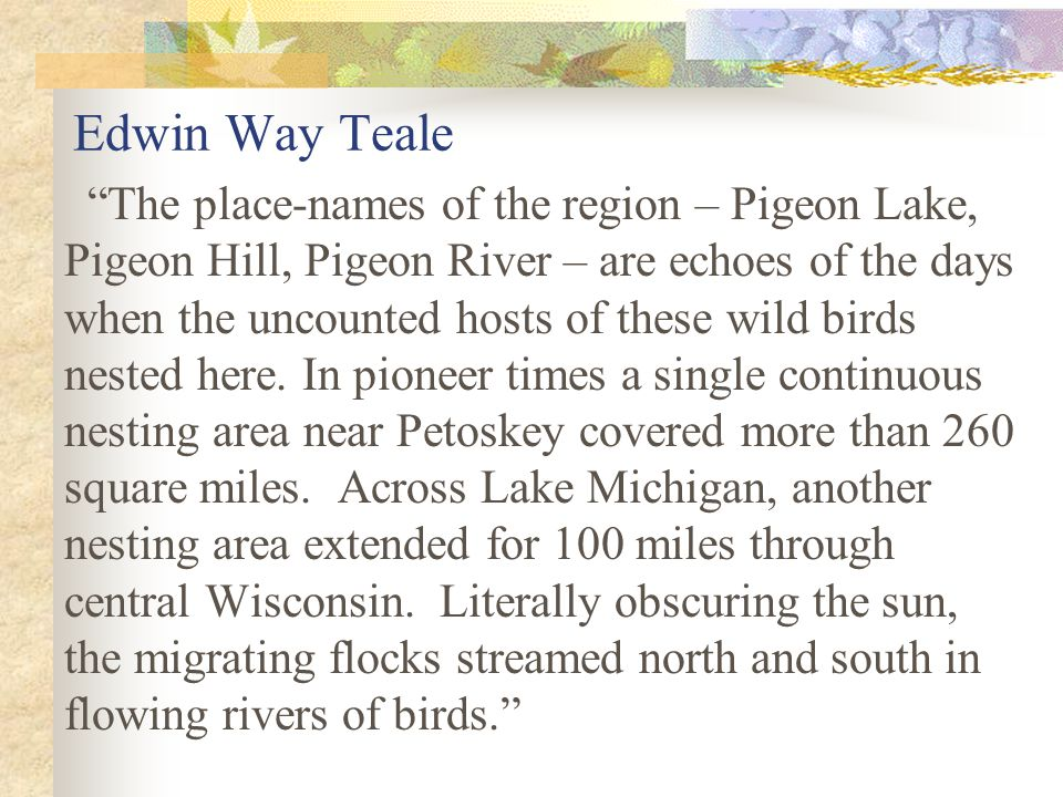 Edwin Way Teale The place-names of the region – Pigeon Lake, Pigeon Hill, Pigeon River – are echoes of the days when the uncounted hosts of these wild birds nested here.