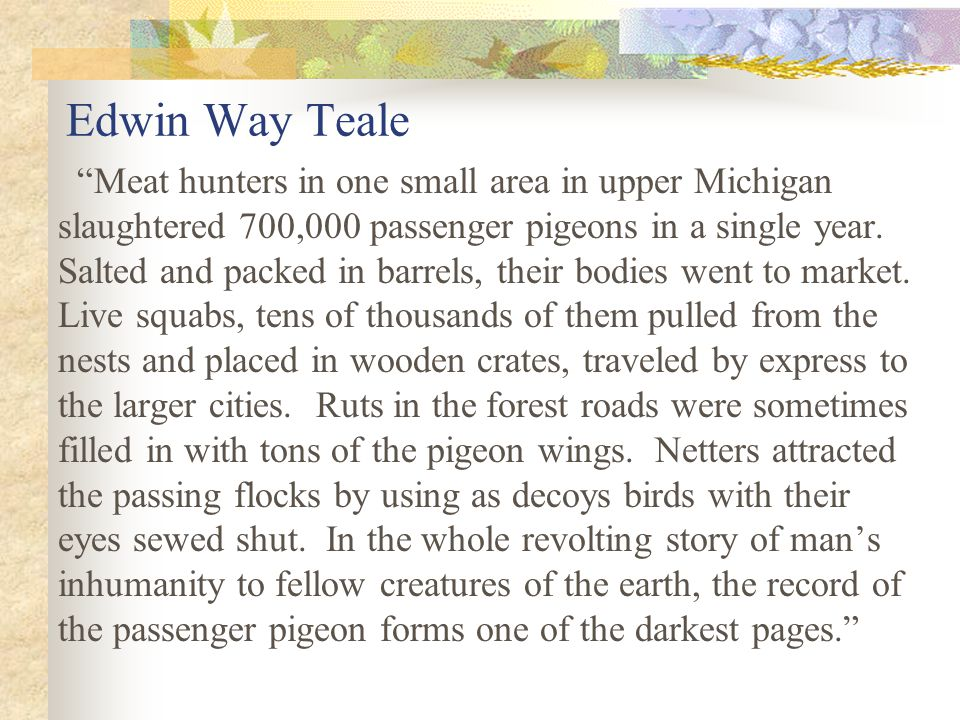 Edwin Way Teale Meat hunters in one small area in upper Michigan slaughtered 700,000 passenger pigeons in a single year.