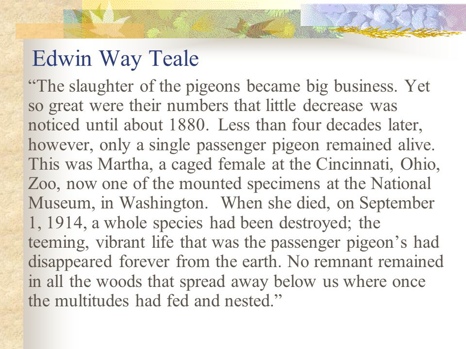 Edwin Way Teale The slaughter of the pigeons became big business.