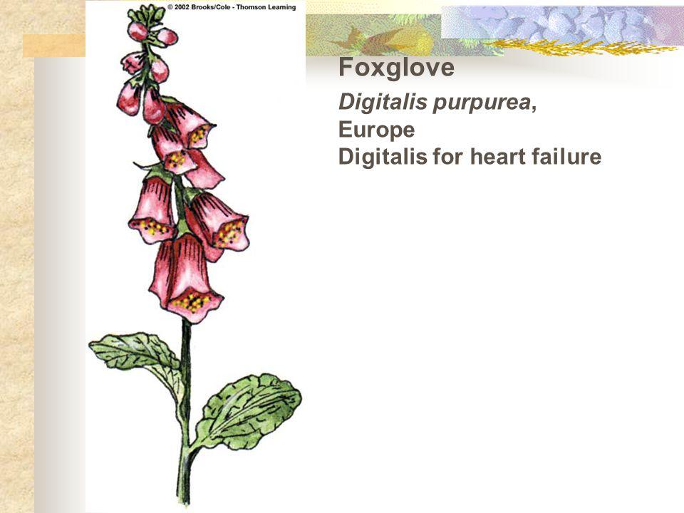Foxglove Digitalis purpurea, Europe Digitalis for heart failure
