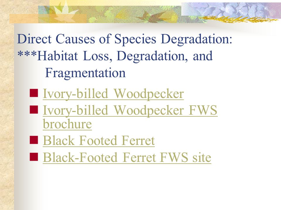 Ivory-billed Woodpecker Ivory-billed Woodpecker FWS brochure Ivory-billed Woodpecker FWS brochure Black Footed Ferret Black-Footed Ferret FWS site Direct Causes of Species Degradation: ***Habitat Loss, Degradation, and Fragmentation