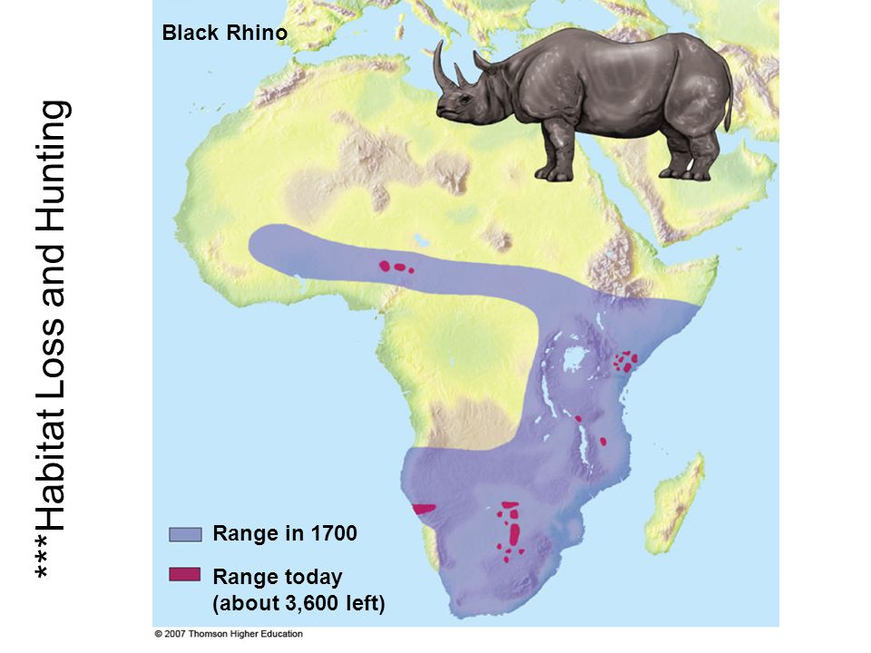 Range in 1700 Black Rhino Range today (about 3,600 left) ***Habitat Loss and Hunting