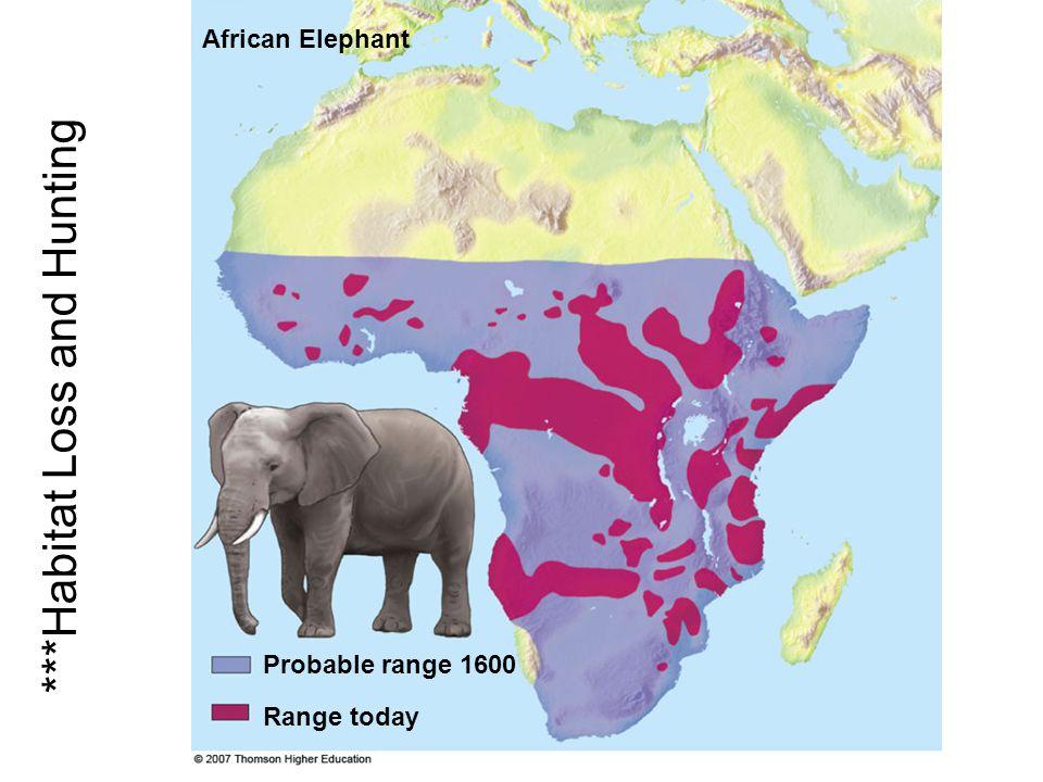 Probable range 1600 African Elephant Range today ***Habitat Loss and Hunting