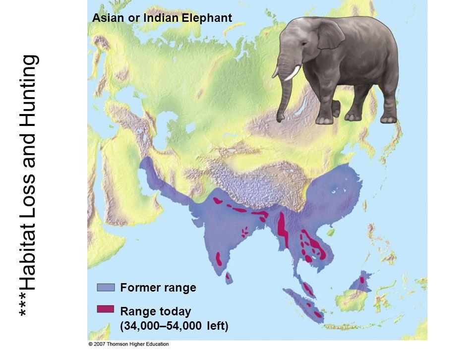 Range today (34,000–54,000 left) Asian or Indian Elephant Former range ***Habitat Loss and Hunting