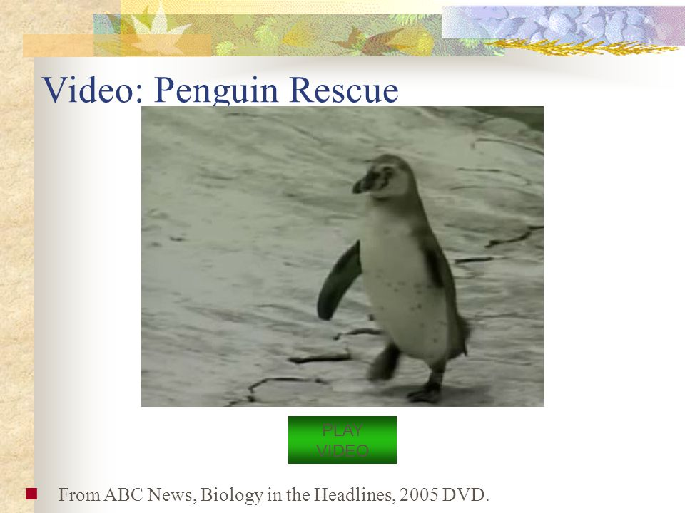 Video: Penguin Rescue From ABC News, Biology in the Headlines, 2005 DVD. PLAY VIDEO