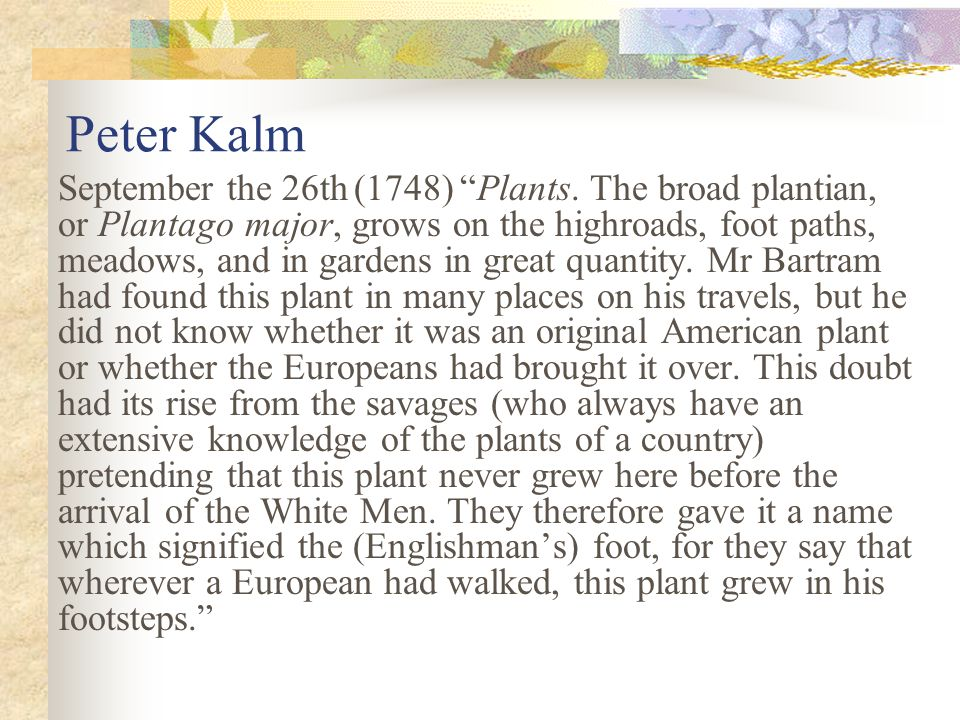 Peter Kalm September the 26th (1748) Plants.