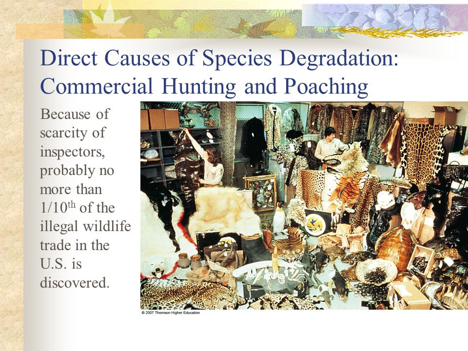 Because of scarcity of inspectors, probably no more than 1/10 th of the illegal wildlife trade in the U.S.