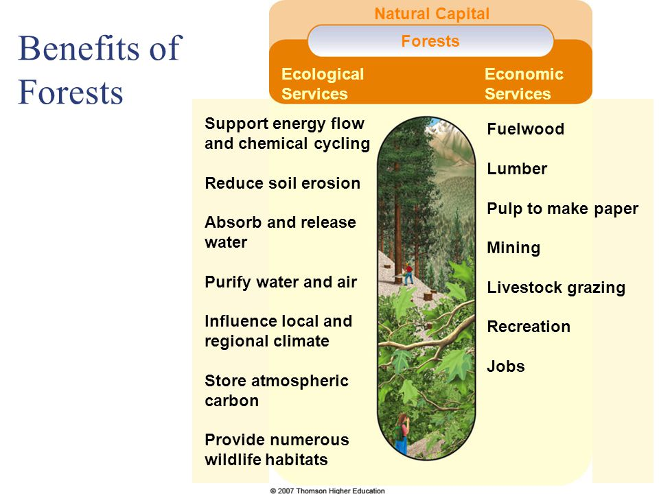 Support energy flow and chemical cycling Reduce soil erosion Absorb and release water Purify water and air Influence local and regional climate Store atmospheric carbon Provide numerous wildlife habitats Forests Natural Capital Fuelwood Lumber Pulp to make paper Mining Livestock grazing Recreation Jobs Economic Services Ecological Services Benefits of Forests
