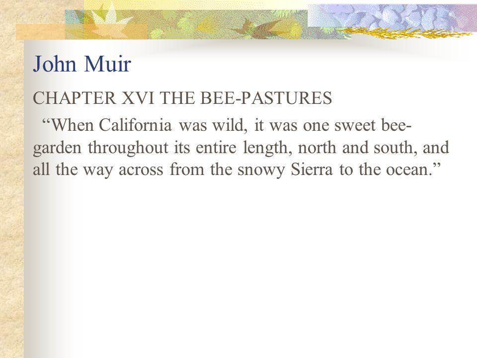John Muir CHAPTER XVI THE BEE-PASTURES When California was wild, it was one sweet bee- garden throughout its entire length, north and south, and all the way across from the snowy Sierra to the ocean.