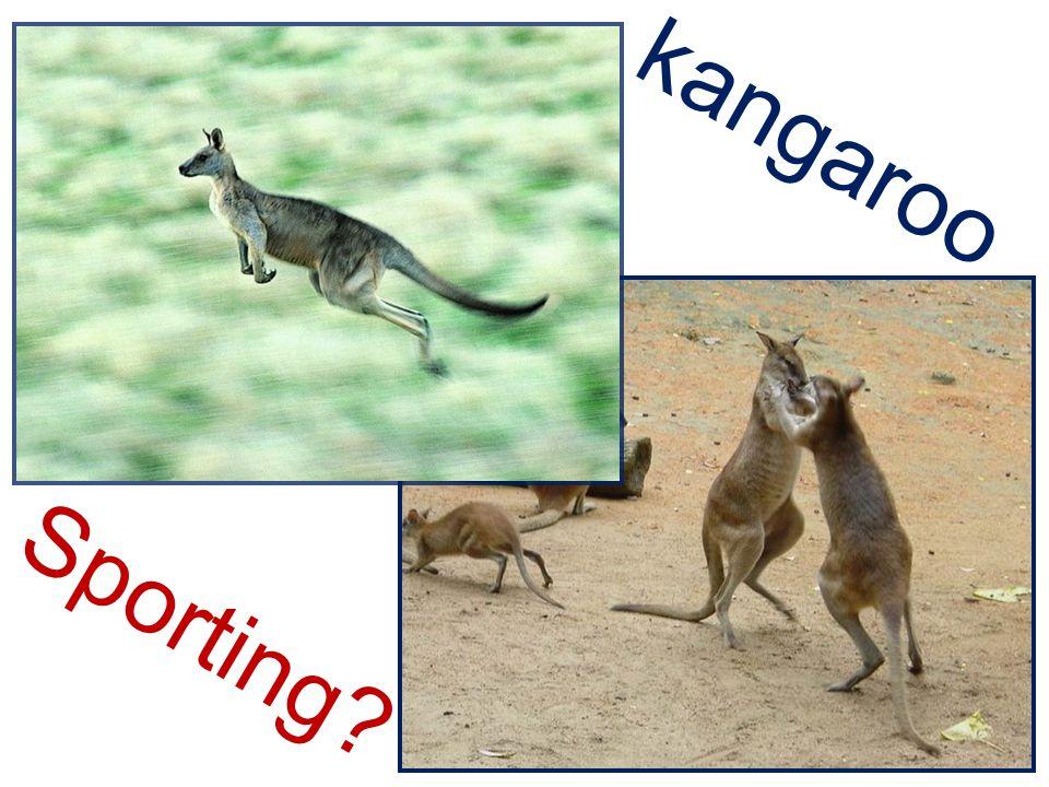 S p o r t i n g ? kangaroo
