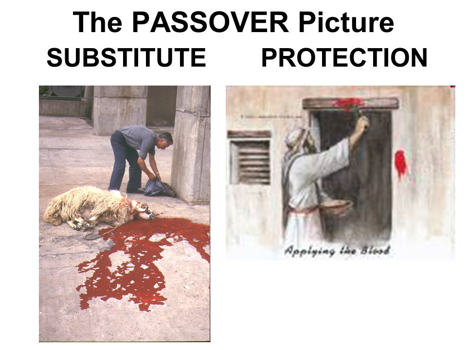The PASSOVER Picture SUBSTITUTEPROTECTION
