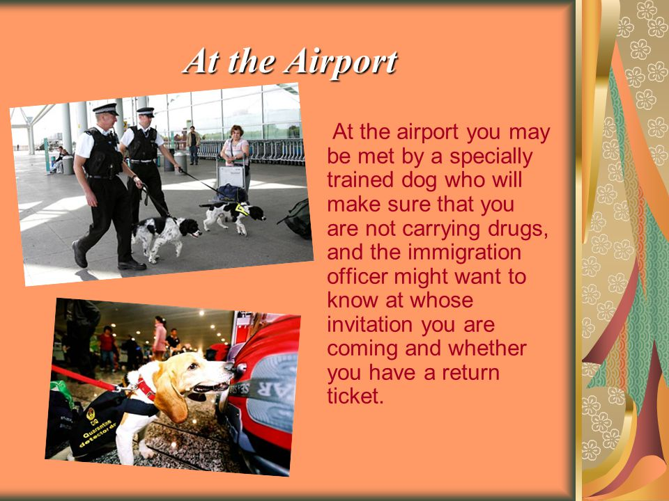 At the Airport At the airport you may be met by a specially trained dog who will make sure that you are not carrying drugs, and the immigration officer might want to know at whose invitation you are coming and whether you have a return ticket.