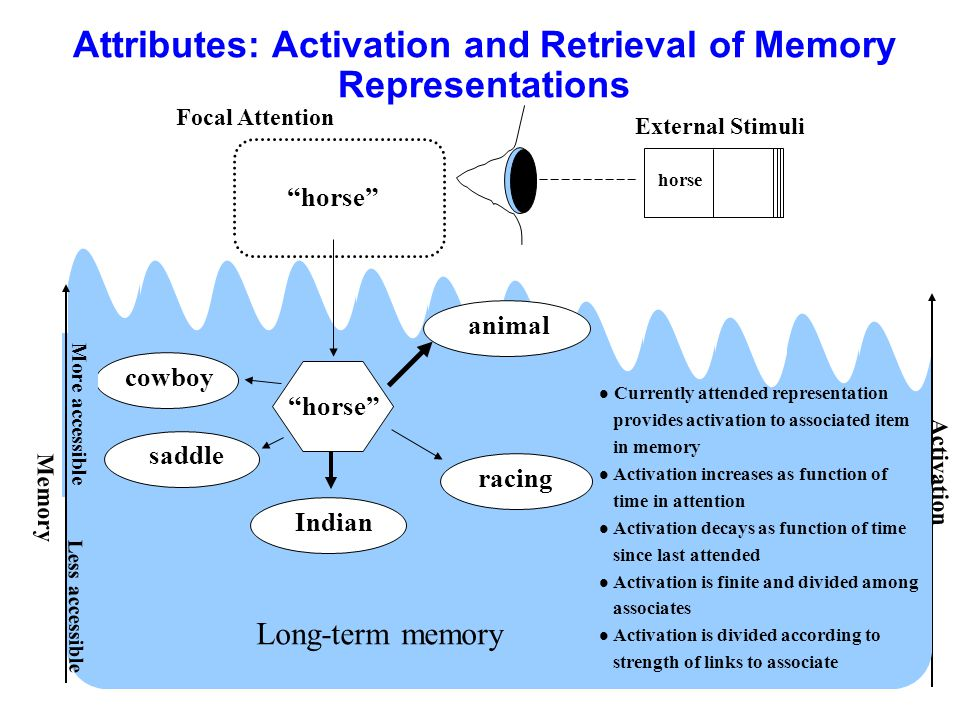 Attributes: Activation and Retrieval of Memory Representations Memory More accessible Activation horse External Stimuli Less accessible Long-term memo