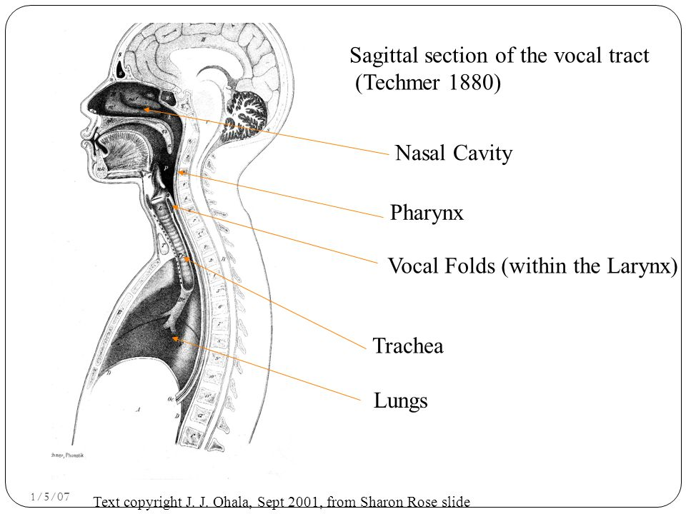 Speech Production Process Respiration: We (normally) speak while breathing out.