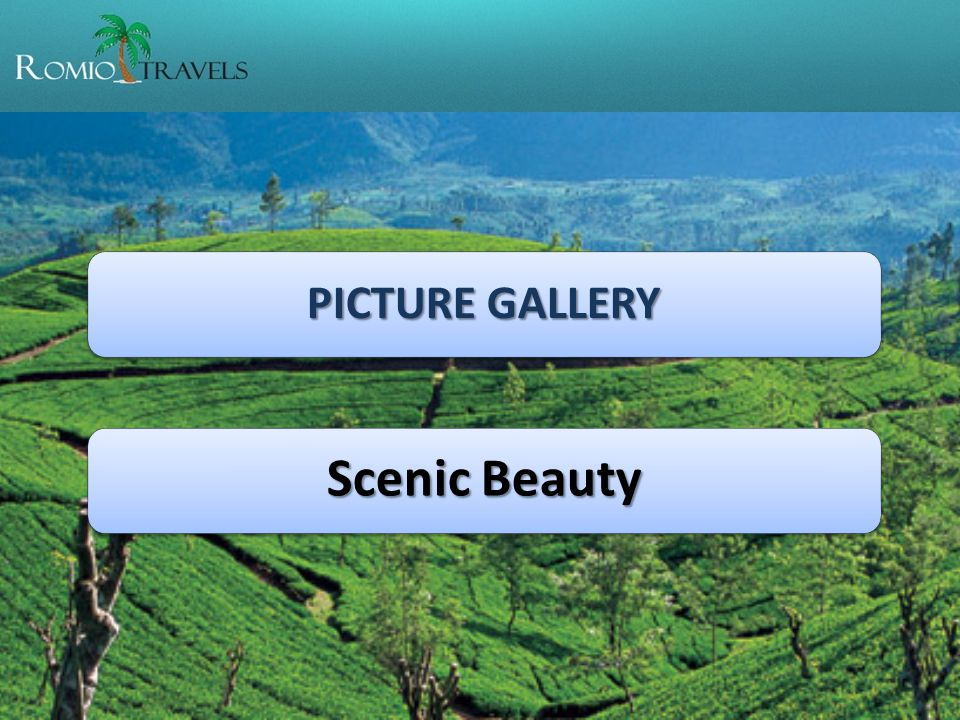 PICTURE GALLERY Scenic Beauty