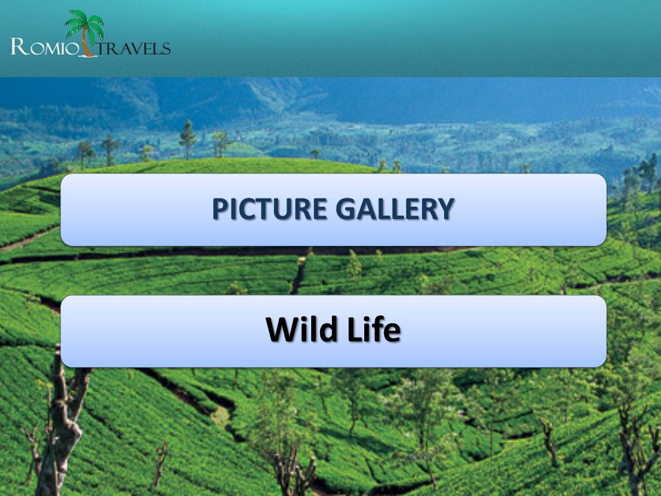 PICTURE GALLERY Wild Life