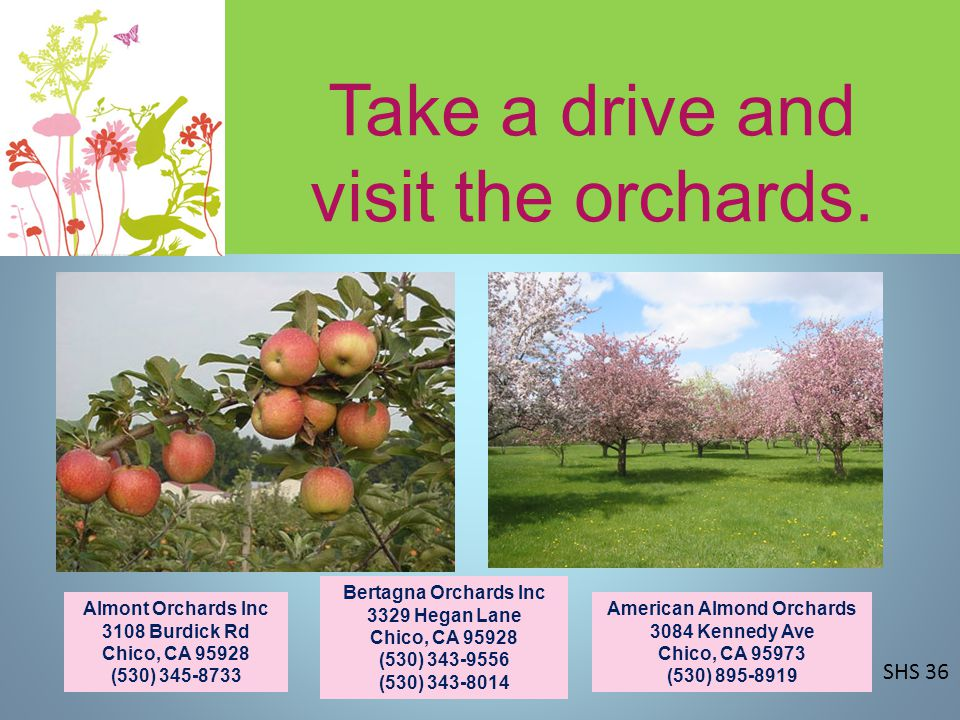 Take a drive and visit the orchards.