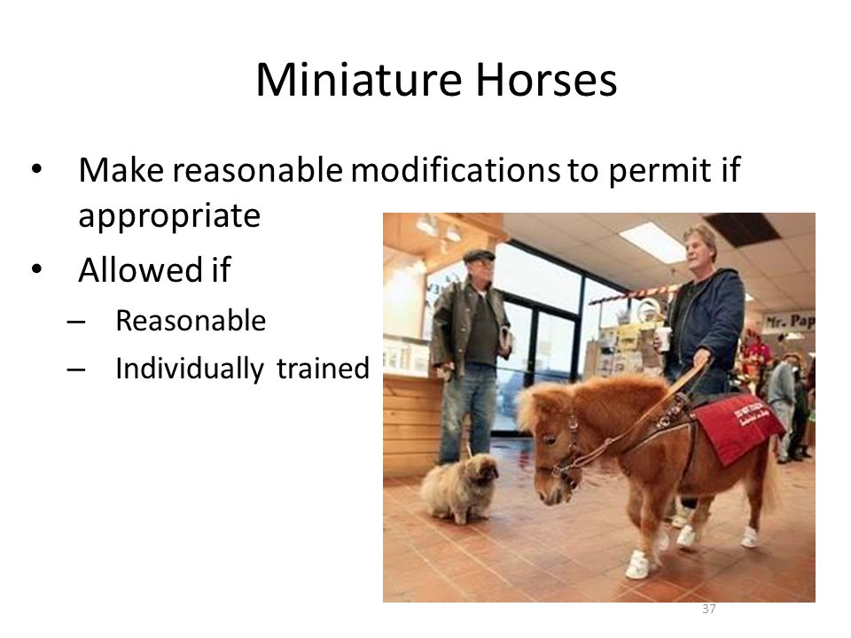 Miniature Horses Make reasonable modifications to permit if appropriate Allowed if – Reasonable – Individually trained 37
