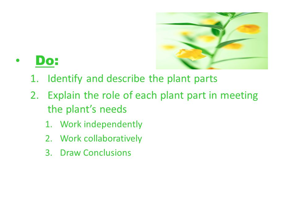 Do: 1.Identify and describe the plant parts 2.Explain the role of each plant part in meeting the plants needs 1.Work independently 2.Work collaboratively 3.Draw Conclusions