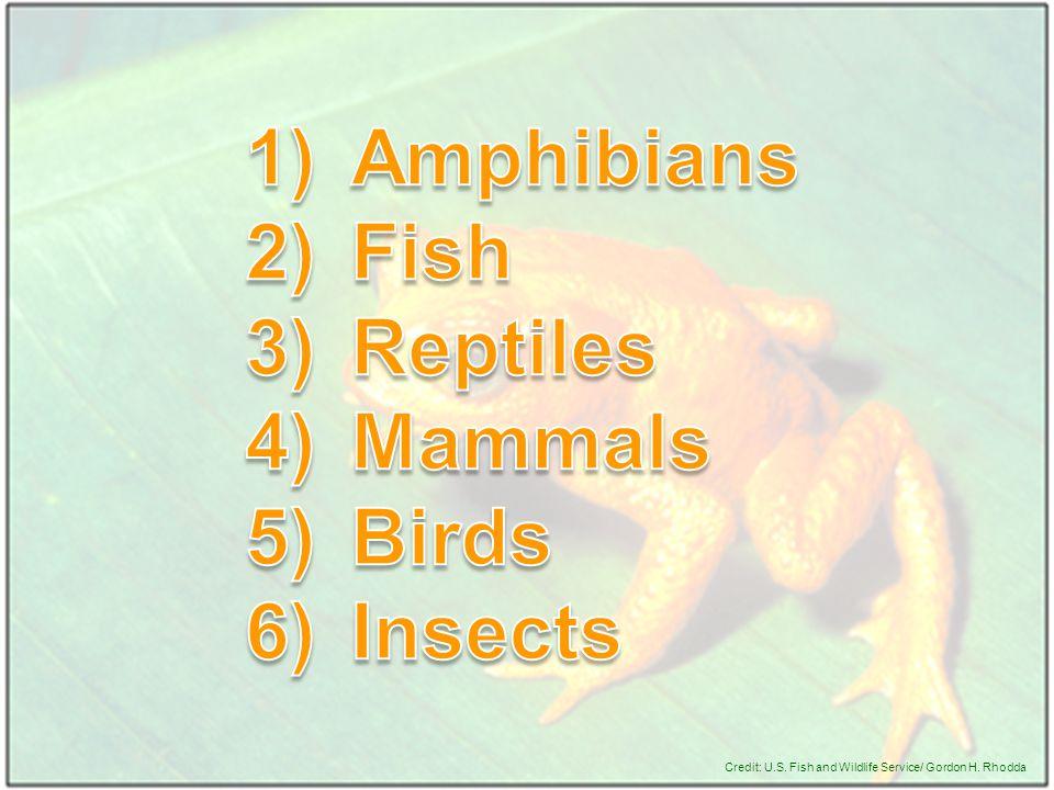 Credit: U.S. Fish and Wildlife Service/ Gordon H. Rhodda