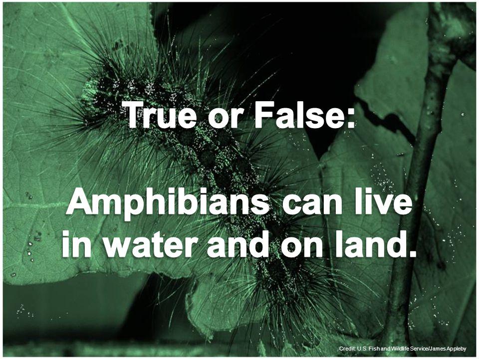 Credit: U.S. Fish and Wildlife Service/James Appleby