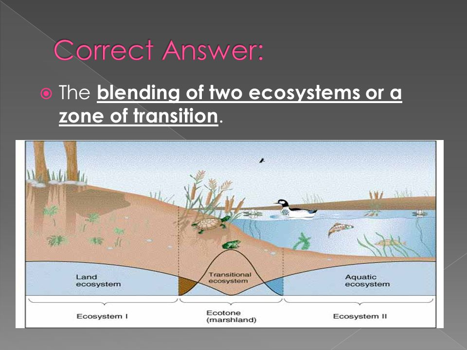 The blending of two ecosystems or a zone of transition.