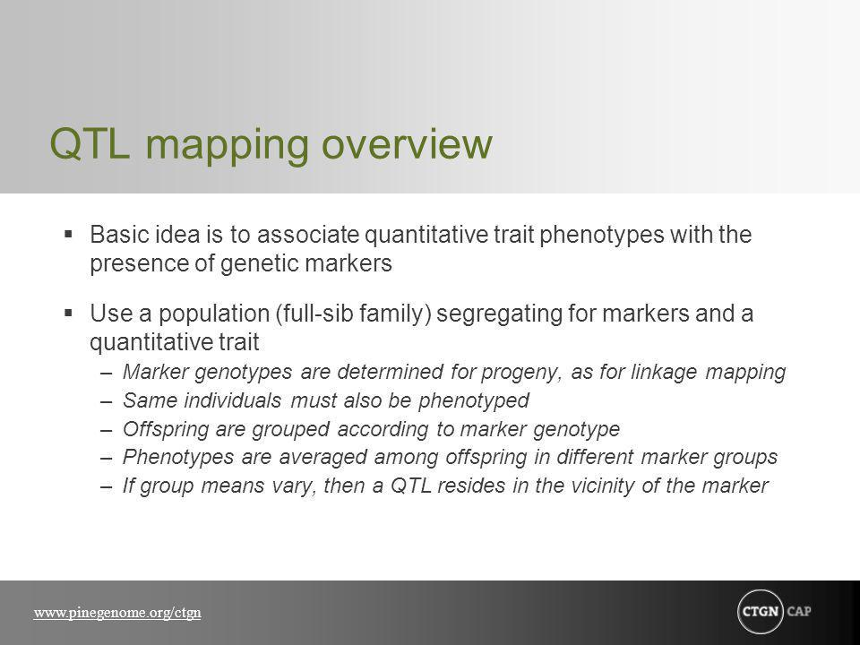 www.pinegenome.org/ctgn QTL mapping overview Basic idea is to associate quantitative trait phenotypes with the presence of genetic markers Use a population (full-sib family) segregating for markers and a quantitative trait –Marker genotypes are determined for progeny, as for linkage mapping –Same individuals must also be phenotyped –Offspring are grouped according to marker genotype –Phenotypes are averaged among offspring in different marker groups –If group means vary, then a QTL resides in the vicinity of the marker