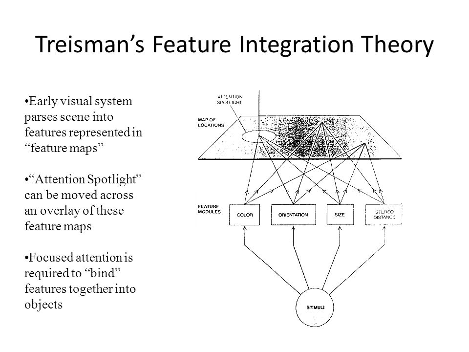 Treismans Feature Integration Theory Early visual system parses scene into features represented in feature maps Attention Spotlight can be moved across an overlay of these feature maps Focused attention is required to bind features together into objects