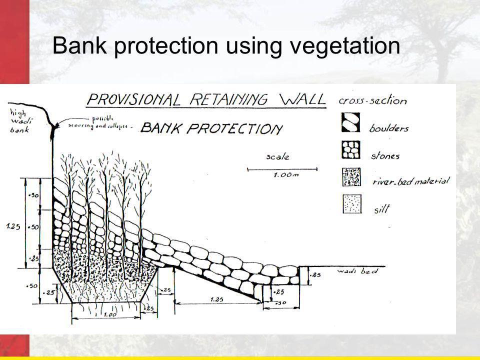 Bank protection using vegetation