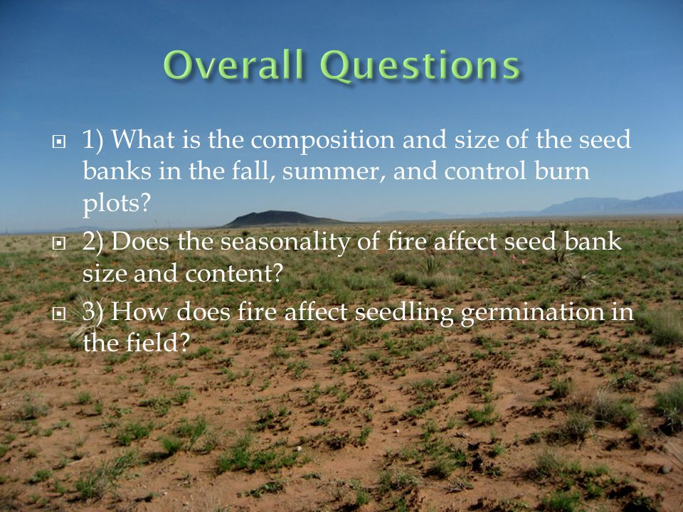 1) What is the composition and size of the seed banks in the fall, summer, and control burn plots.