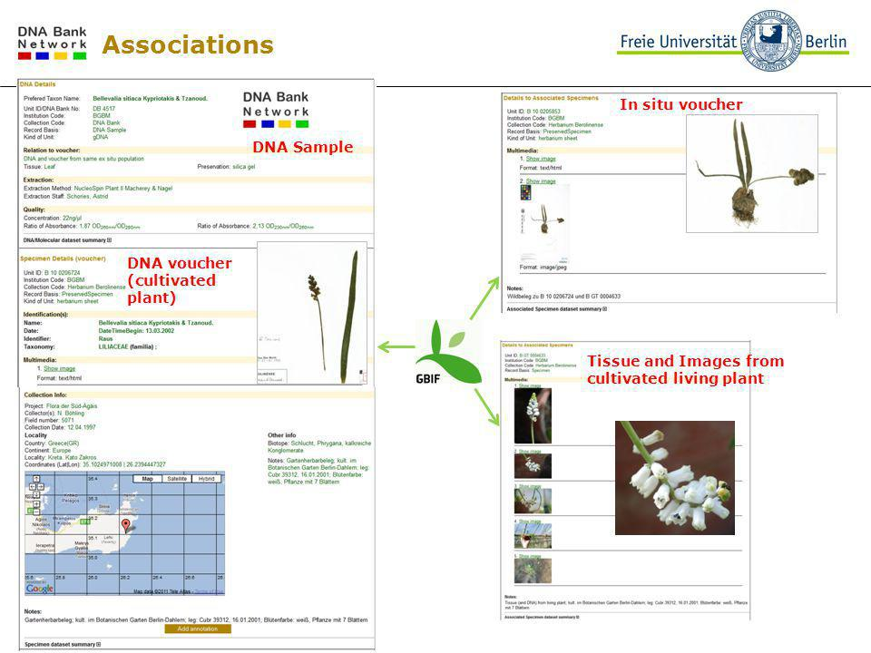 Associations In situ voucher DNA voucher (cultivated plant) Tissue and Images from cultivated living plant DNA Sample