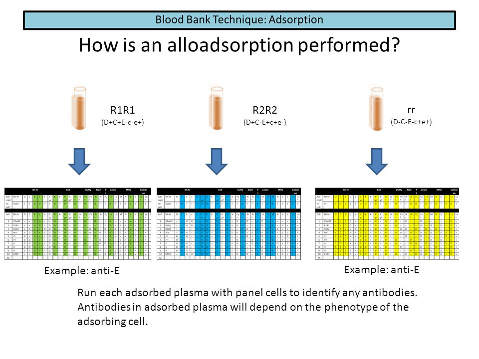 How is an alloadsorption performed? R1R1 (D+C+E-c-e+) R2R2 (D+C-E+c+e-) rr (D-C-E-c+e+) Run each adsorbed plasma with panel cells to identify any anti
