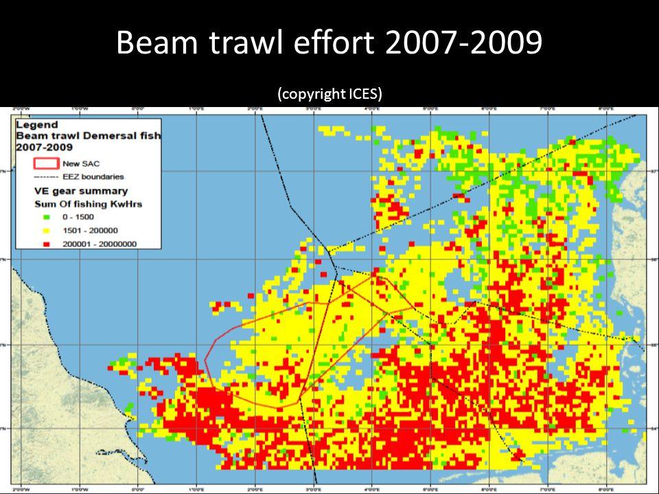Beam trawl effort 2007-2009 (copyright ICES)