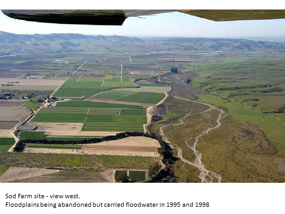 Sod Farm site - view west. Floodplains being abandoned but carried floodwater in 1995 and 1998