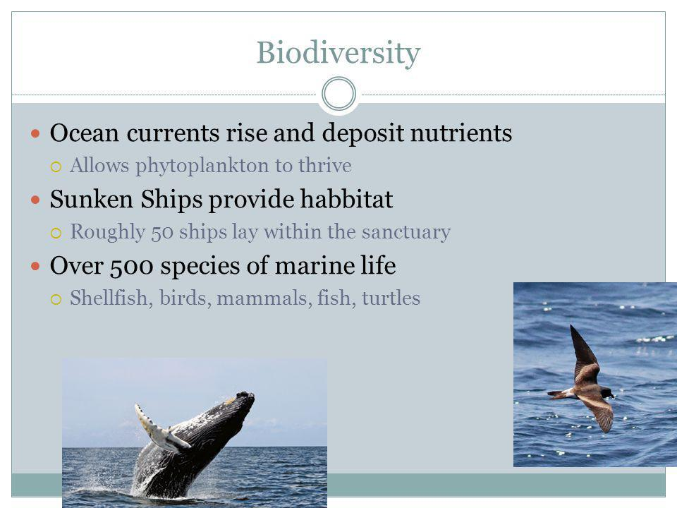 Biodiversity Ocean currents rise and deposit nutrients Allows phytoplankton to thrive Sunken Ships provide habbitat Roughly 50 ships lay within the sanctuary Over 500 species of marine life Shellfish, birds, mammals, fish, turtles