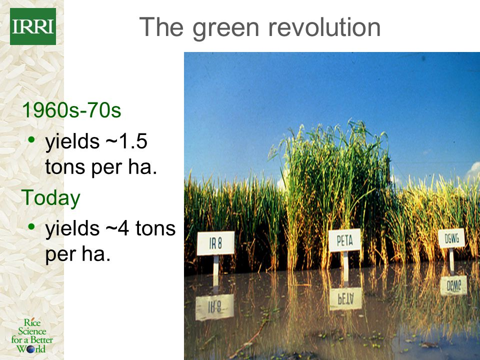 The green revolution 1960s-70s yields ~1.5 tons per ha. Today yields ~4 tons per ha.