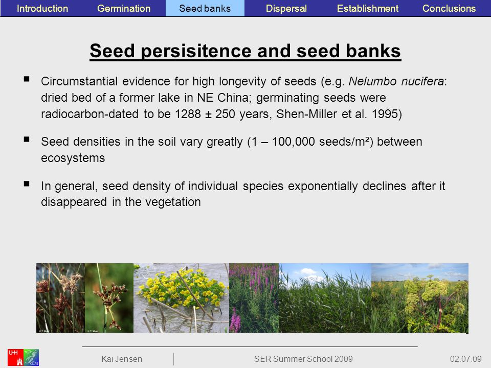 Seed persisitence and seed banks Circumstantial evidence for high longevity of seeds (e.g.