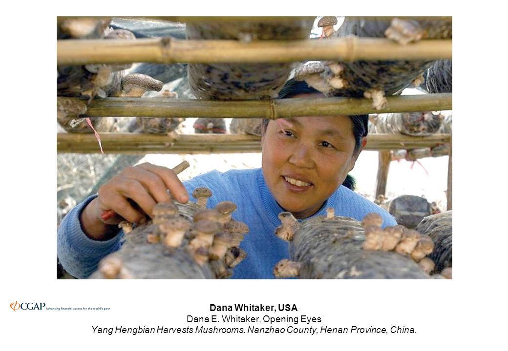 Dana Whitaker, USA Dana E. Whitaker, Opening Eyes Yang Hengbian Harvests Mushrooms.
