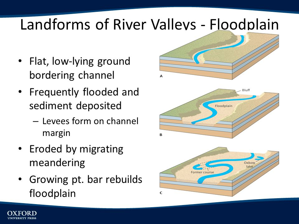 Landforms of River Valleys - Floodplain Flat, low-lying ground bordering channel Frequently flooded and sediment deposited – Levees form on channel ma