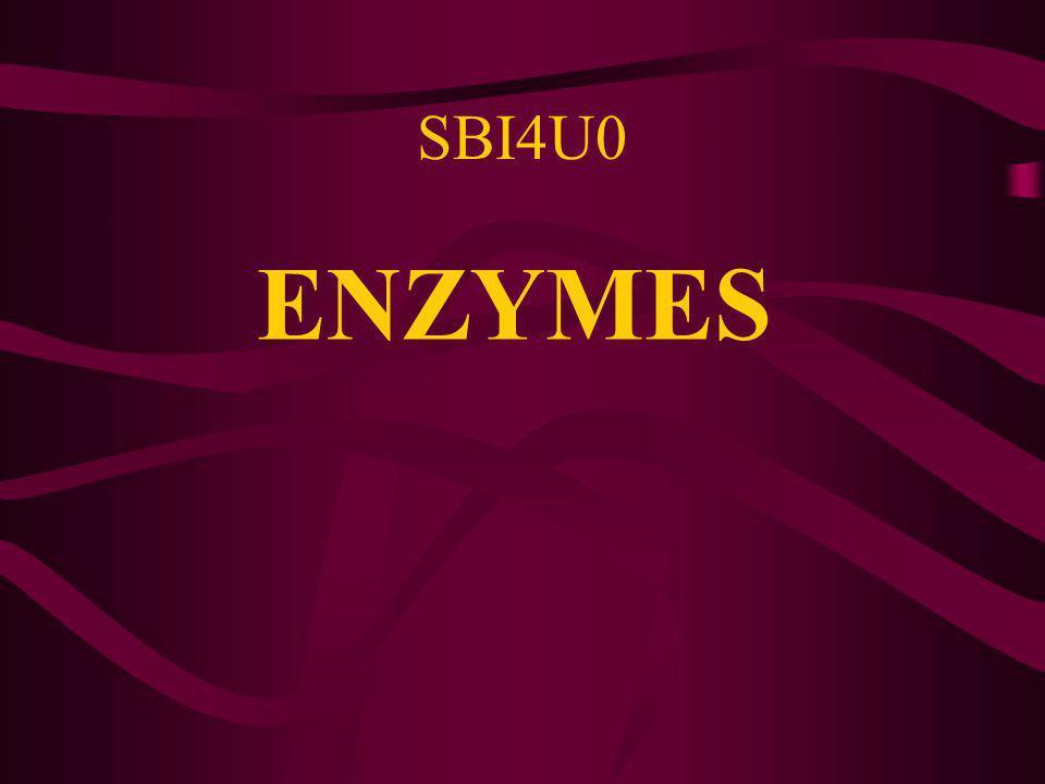 ENZYMES SBI4U0