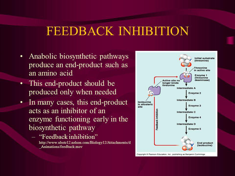 FEEDBACK INHIBITION Anabolic biosynthetic pathways produce an end-product such as an amino acid This end-product should be produced only when needed I