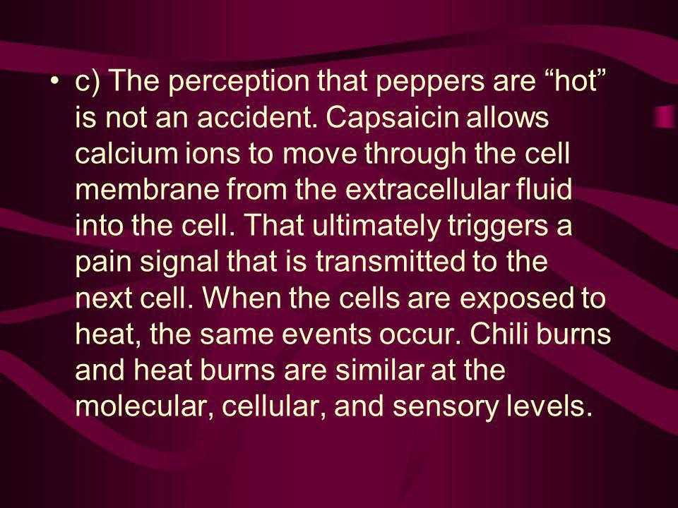 c) The perception that peppers are hot is not an accident. Capsaicin allows calcium ions to move through the cell membrane from the extracellular flui