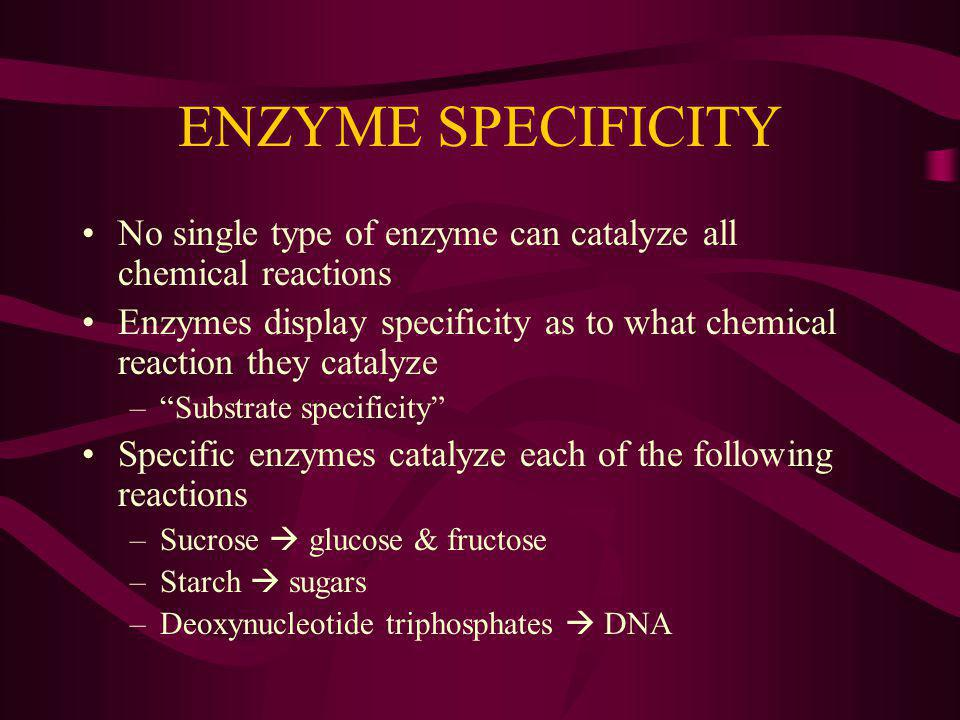 ENZYME SPECIFICITY No single type of enzyme can catalyze all chemical reactions Enzymes display specificity as to what chemical reaction they catalyze –Substrate specificity Specific enzymes catalyze each of the following reactions –Sucrose glucose & fructose –Starch sugars –Deoxynucleotide triphosphates DNA