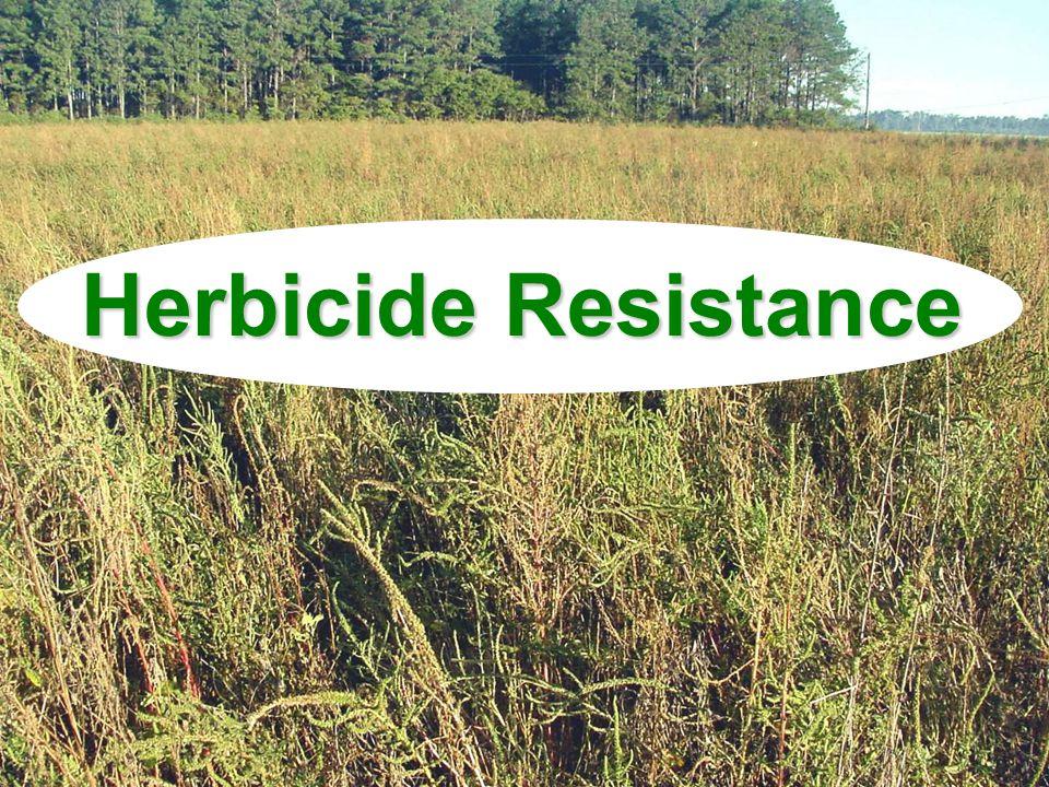 Glyphosate-Resistant Weeds in the US 7 Broadleaf weeds 5 Grasses Palmer amaranthItalian ryegrass Tall waterhempRigid ryegrass Common ragweedJohnsongrass Giant ragweedGoosegrass Hairy fleabaneAnnual bluegrass Horseweed Kochia