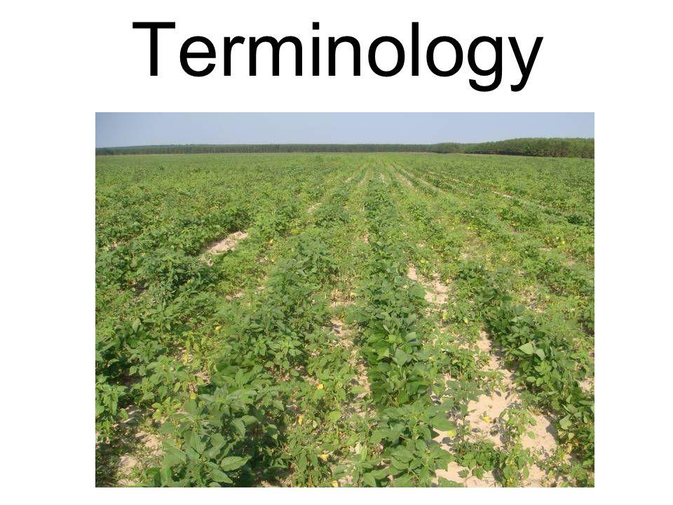 Burndown for Glyphosate-Resistant Ryegrass If you suspect glyphosate resistance: –Minimum of 2 pt/A Gramoxone applied twice.