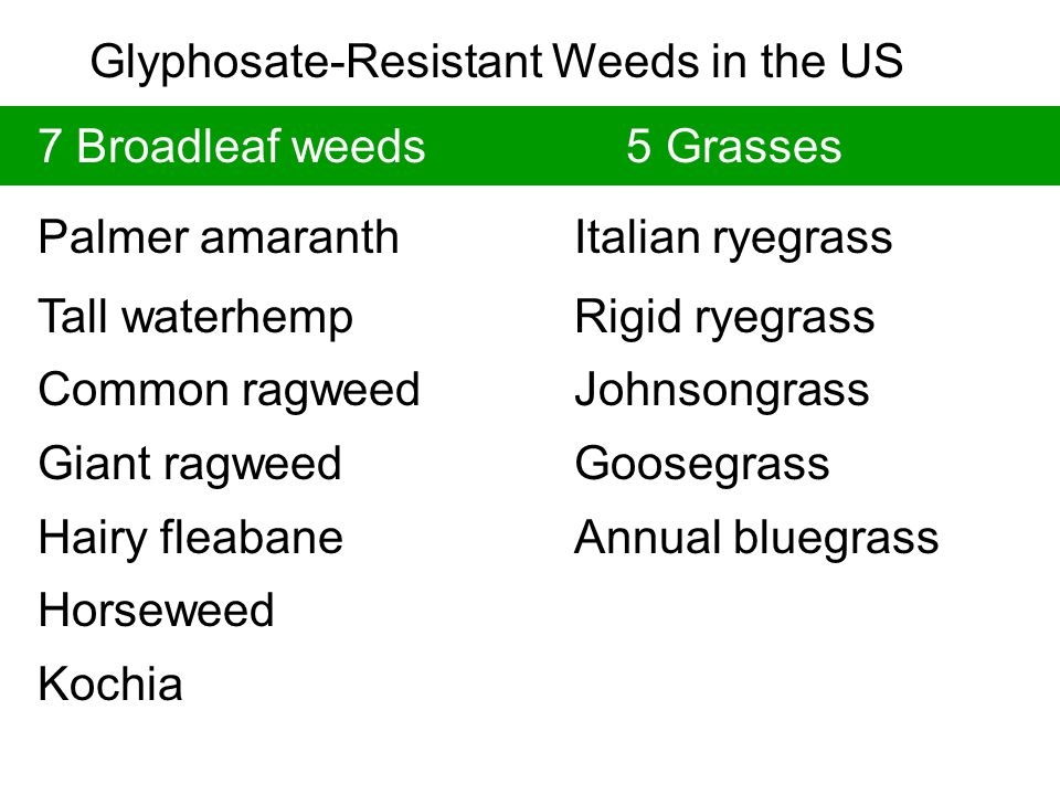 Glyphosate-Resistant Weeds in the US 7 Broadleaf weeds 5 Grasses Palmer amaranthItalian ryegrass Tall waterhempRigid ryegrass Common ragweedJohnsongrass Giant ragweedGoosegrass Hairy fleabaneAnnual bluegrass Horseweed Kochia