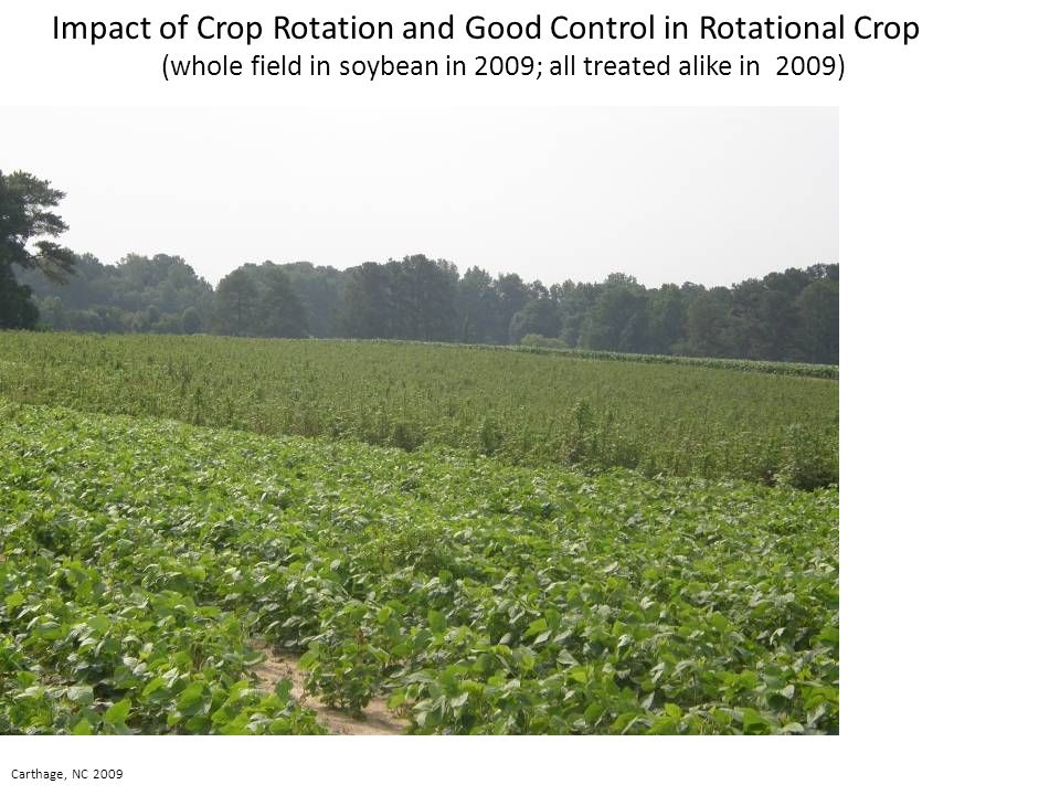 Impact of Crop Rotation and Good Control in Rotational Crop (whole field in soybean in 2009; all treated alike in 2009) Carthage, NC 2009
