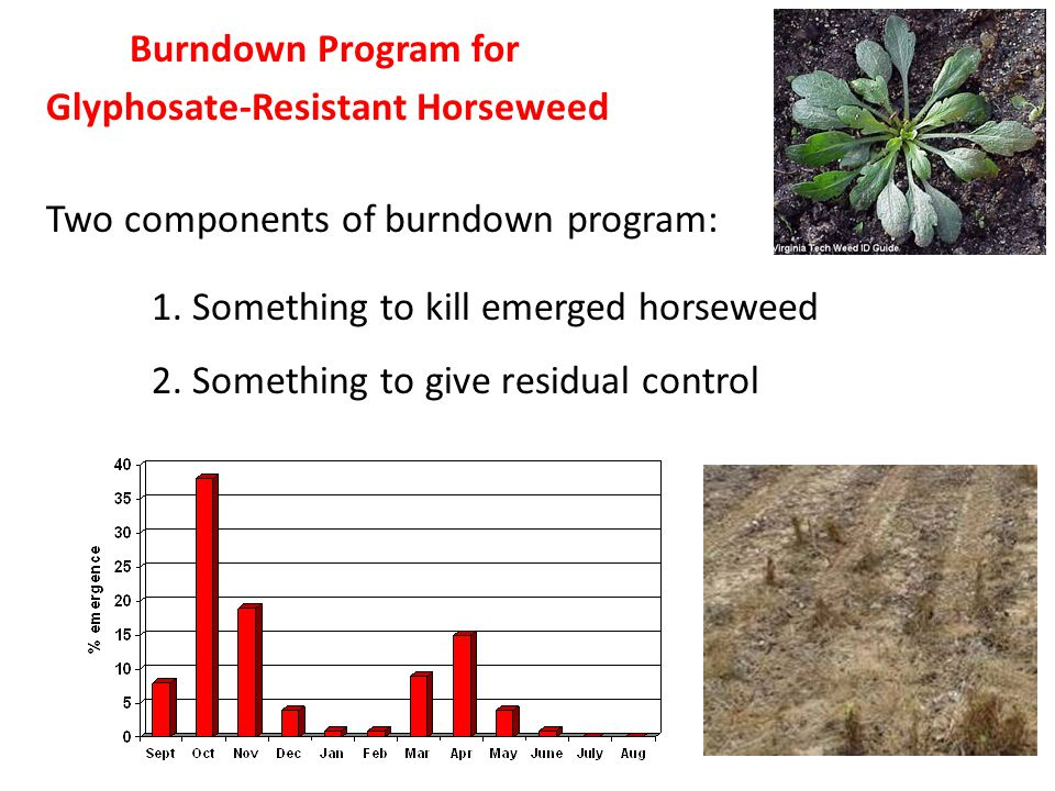 Burndown Program for Glyphosate-Resistant Horseweed Two components of burndown program: 1.