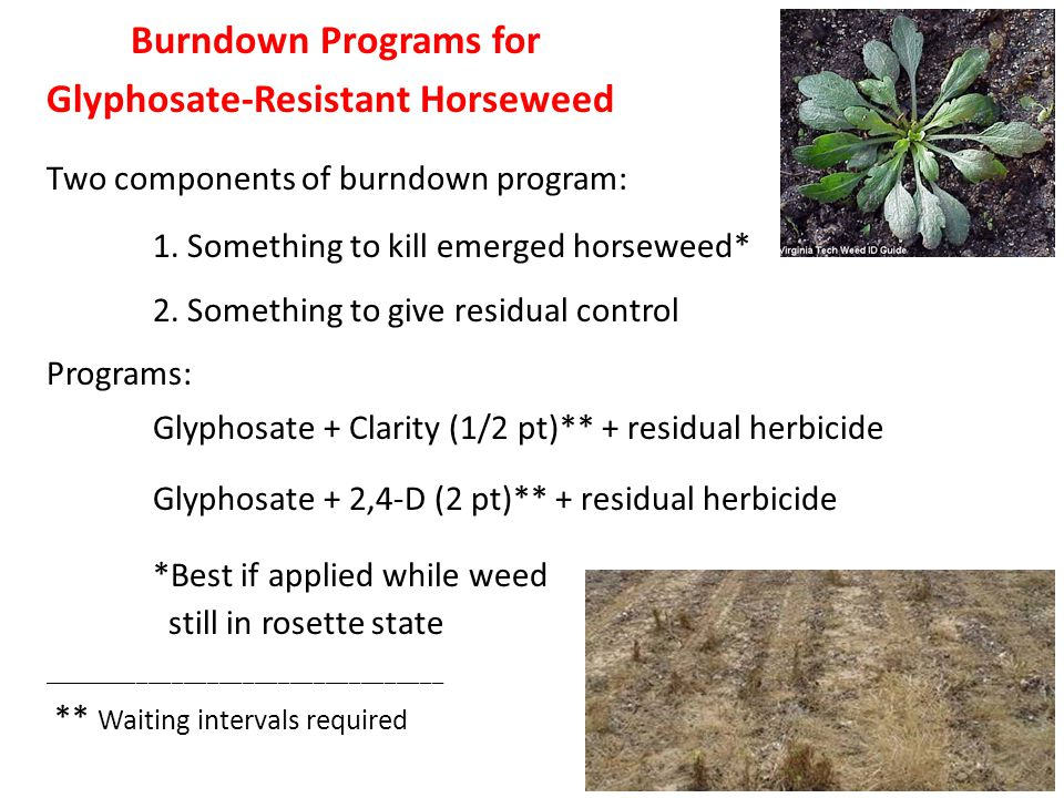 Burndown Programs for Glyphosate-Resistant Horseweed Two components of burndown program: 1.